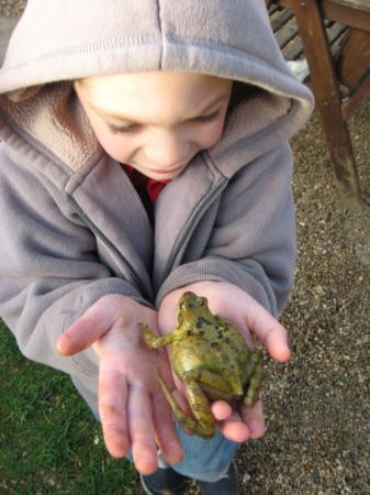 lowestoft_frog-in-hand-d_apr-09.jpg