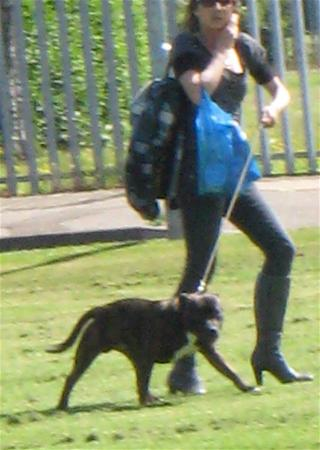 lowestoft_gorleston-staffordshire-bull-terrier_jun-09.jpg