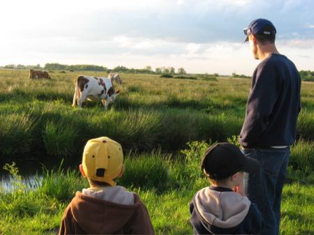 lowestoft_marsh-cows-boys-river.jpg